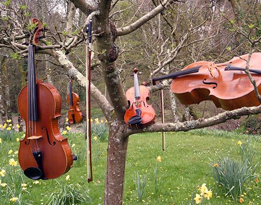 Rosewood String Quartet